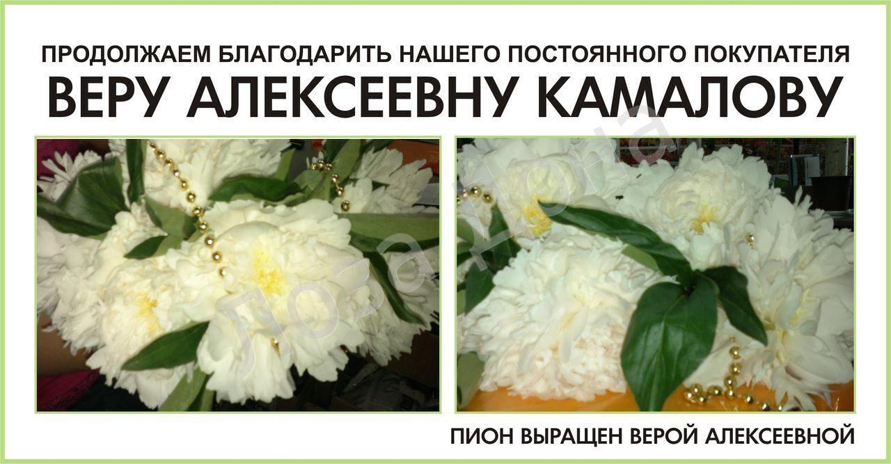 ВЕРА АЛЕКСЕЕВНА ПИОН