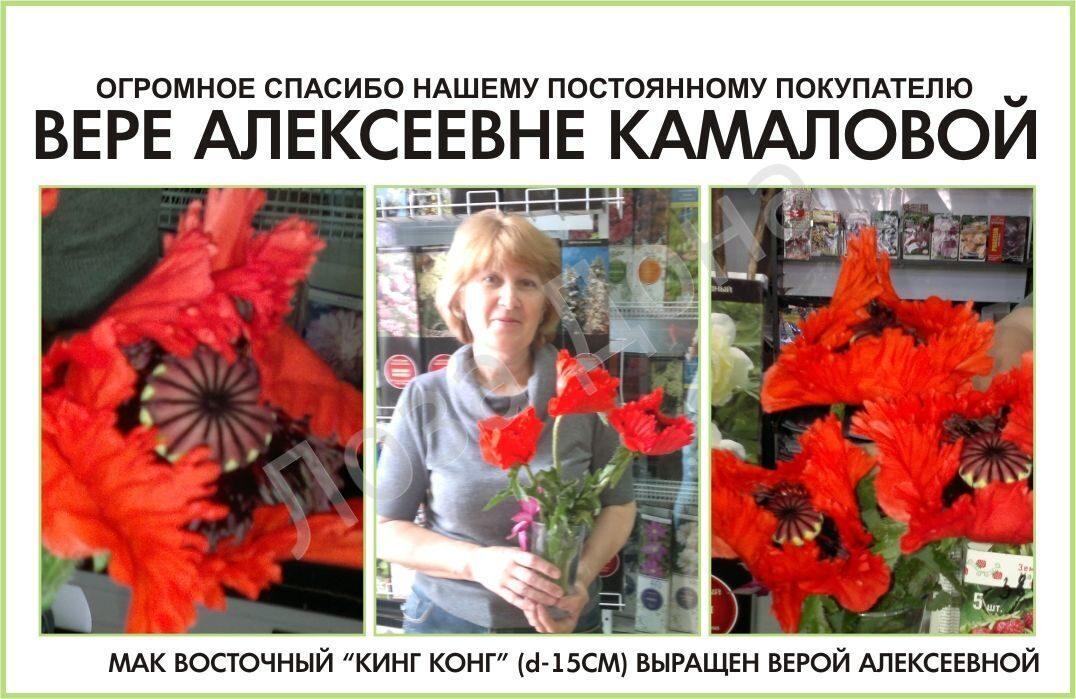 Вера Алексеевна