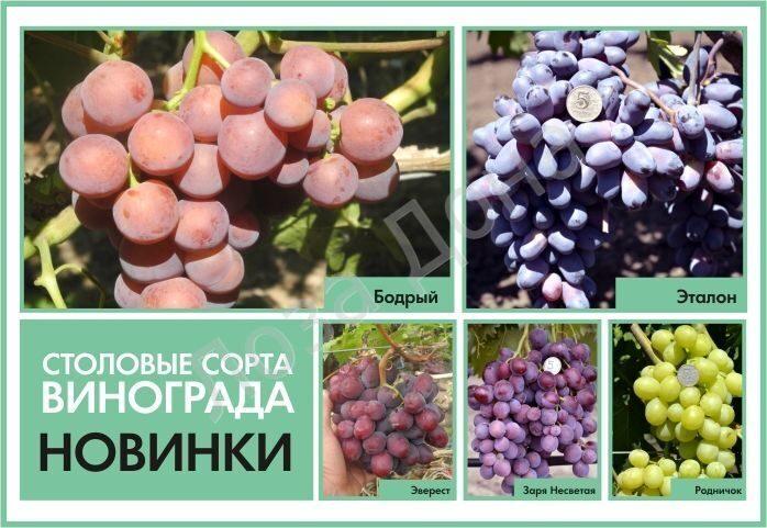 НОВИНКИ винограда 2015 New