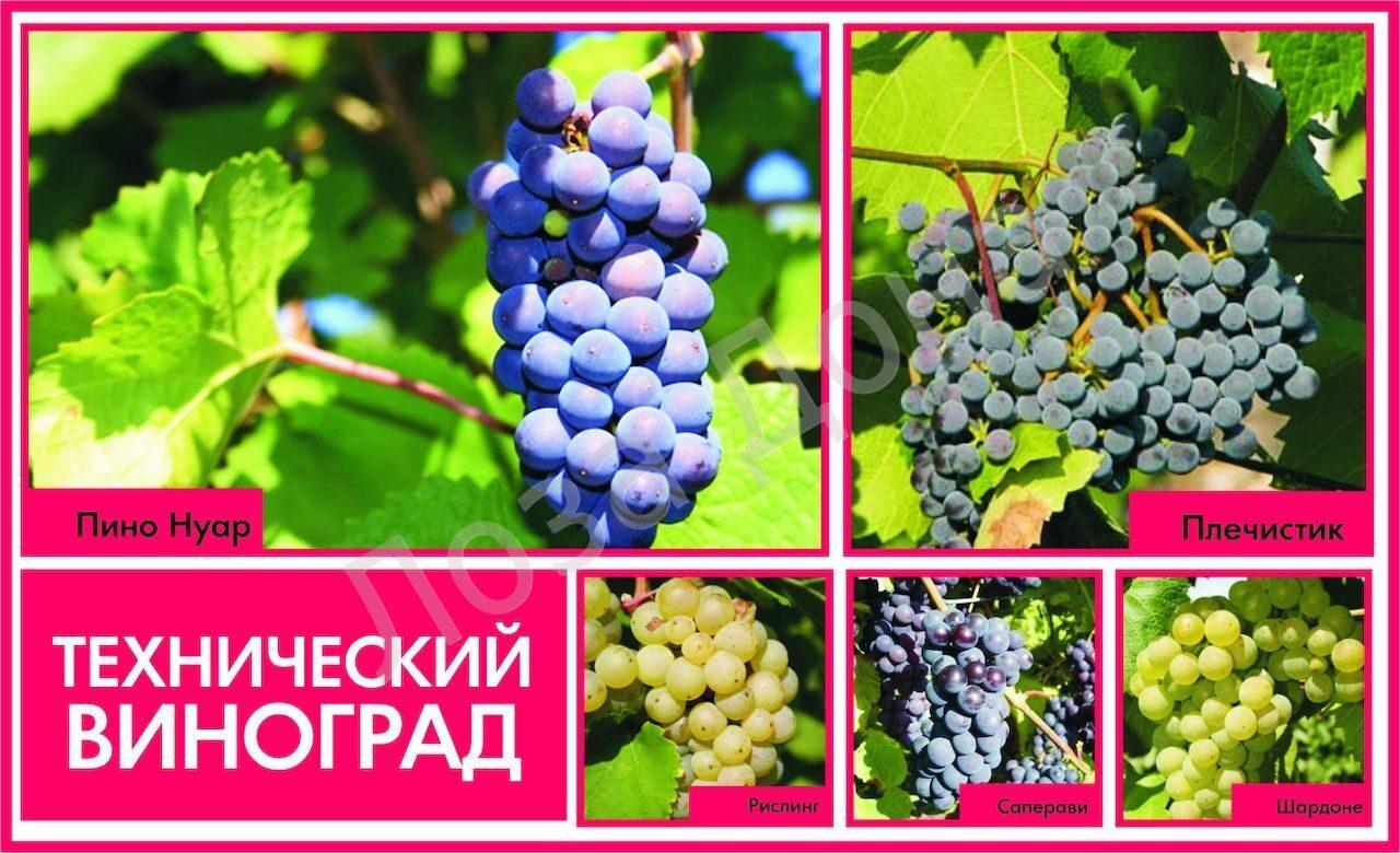 виноград техническ